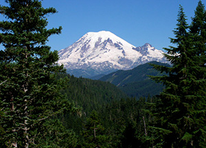 A picture of Mt. Rainier taken between two trees and over large swath of land